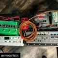 Reggie Watts Looping Pedalboard